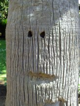 Friendly tree-face!