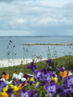 Flowers and beach