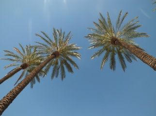 One of my favorite trees - the Palm tree!