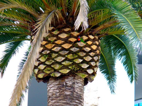 I was constantly surprised by nature - here a colorful parrot in a palm tree!